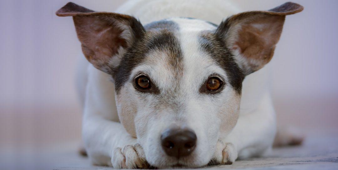 animal communication consultations