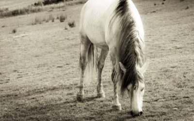 The Simple Healing Power of Equine Guided Learning