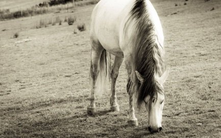 equine guided learning