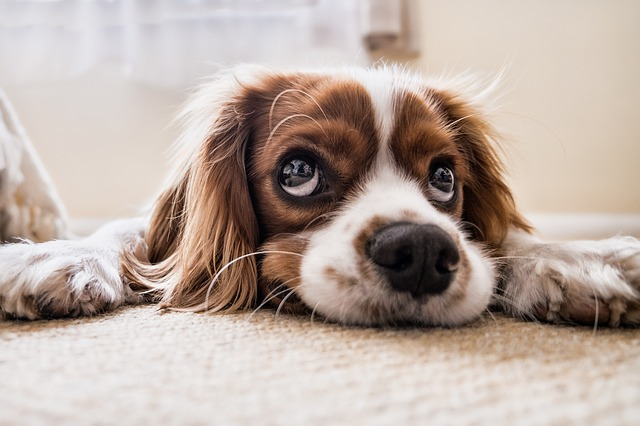Animal Communication Courses