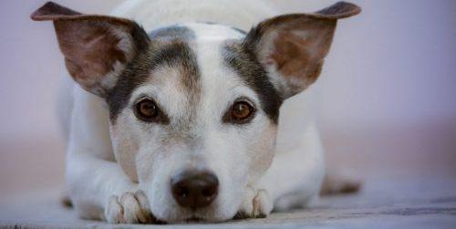 Animal Communicator Blog Post